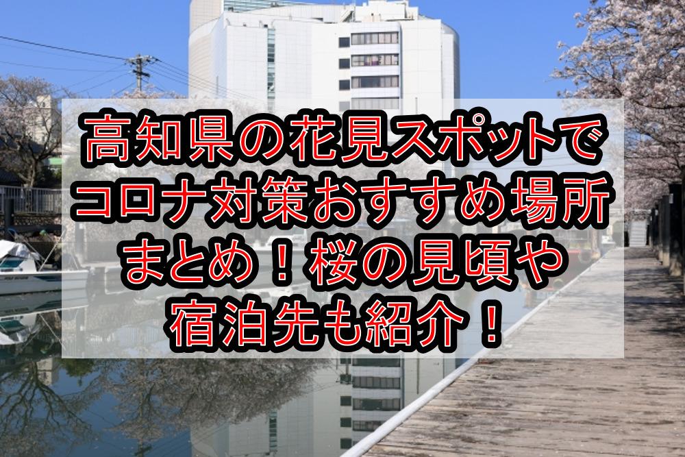 高知県の花見スポットでコロナ対策おすすめ場所まとめ!桜の見頃や宿泊先も紹介!【2021年最新】