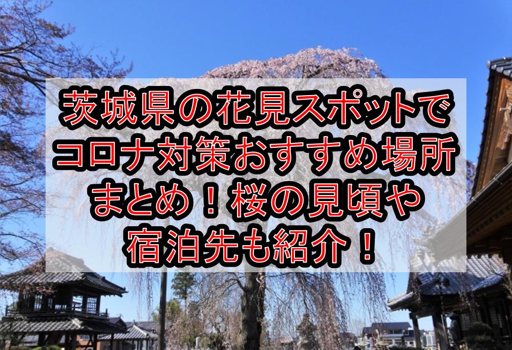 茨城県の花見スポットでコロナ対策おすすめ場所まとめ!桜の見頃や宿泊先も紹介!【2021年最新】