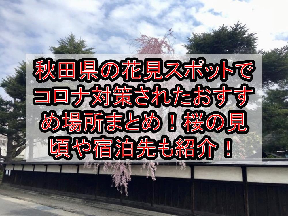 秋田県の花見スポットでコロナ対策されたおすすめ場所まとめ!桜の見頃や宿泊先も紹介!【2021最新】