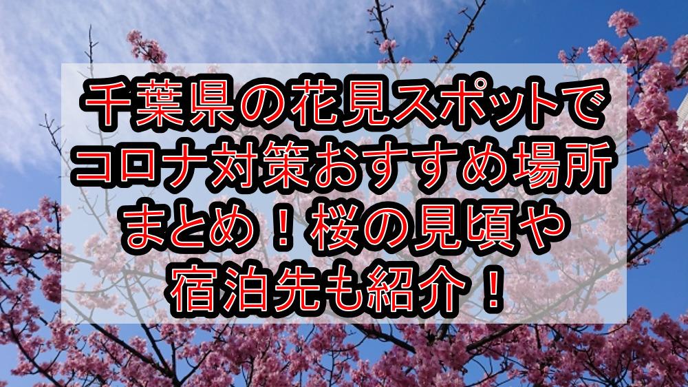 千葉県の花見スポットでコロナ対策おすすめ場所まとめ!桜の見頃や宿泊先も紹介!【2021最新】