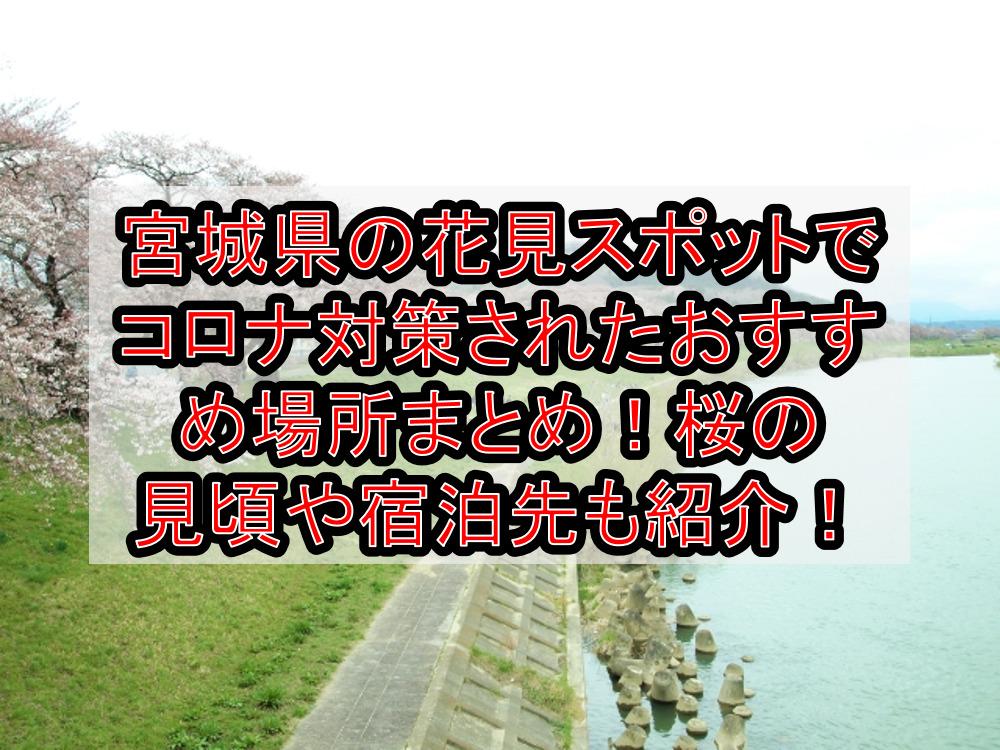 宮城県の花見スポットでコロナ対策されたおすすめ場所まとめ!桜の見頃や宿泊先も紹介!【2021最新】