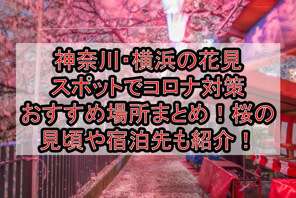 神奈川・横浜の花見スポットでコロナ対策おすすめ場所まとめ!桜の見頃や宿泊先も紹介!【2021最新】