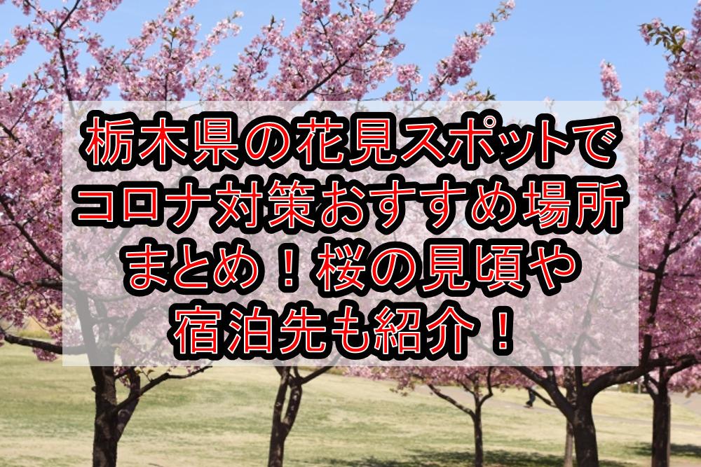 栃木県の花見スポットでコロナ対策おすすめ場所まとめ!桜の見頃や宿泊先も紹介!【2021年最新】