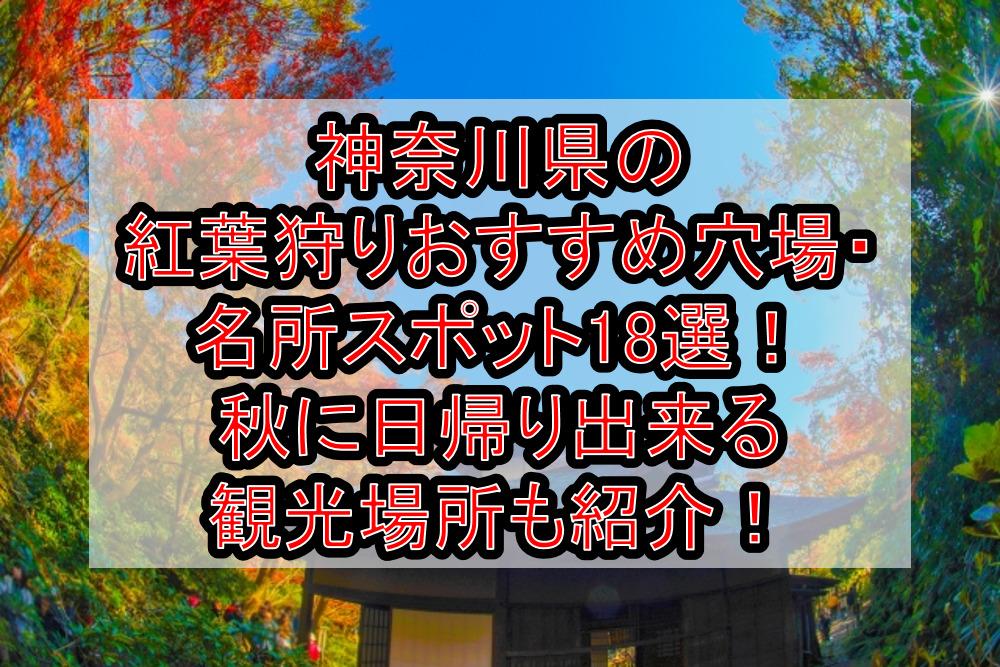 神奈川県の紅葉狩りおすすめ穴場・名所スポット18選!秋に日帰り出来る観光場所も紹介!