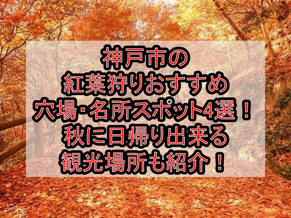 神戸市の紅葉狩りおすすめ穴場・名所スポット4選!秋に日帰り出来る観光場所も紹介!