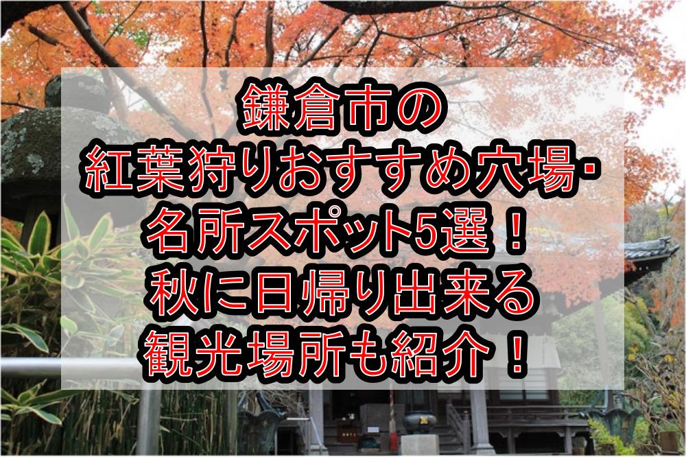 鎌倉市の紅葉狩りおすすめ穴場・名所スポット5選!秋に日帰り出来る観光場所も紹介!
